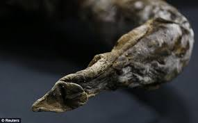 woolly mammoth frozen siberia 39 000