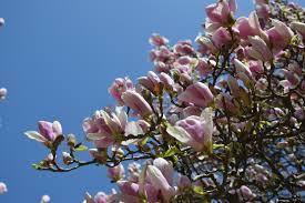 flora sky apk free free images nature branch blossom sky wood petal floral