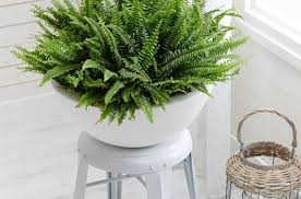 enthrall photo planters on sale superior plants online mesmerize