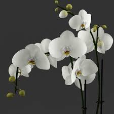 white orchids 3d model white orchid in glass pot with stones cgtrader