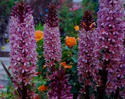 Beautiful Color Combinations Garden Color Schemes U2014 Plant A Palette In Your Yard