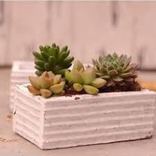 wood succulent planter cactus planter box by andrewsreclaimed