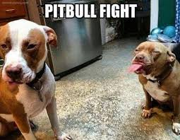 Funny Fight Memes - pit bull fight funny dog memes on share its funny