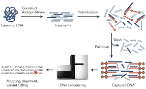 Dna Mapping Genesky Bio Tech Targeted Sequencing Cnv Detection Snp