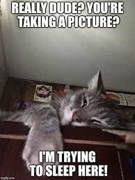 Sleepy Kitty Meme - sleepy kitty imgflip