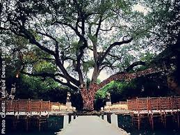 cheap wedding venues in miami villa woodbine coconut grove weddings miami wedding venues 33133