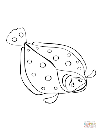 flounder fish coloring free printable coloring pages