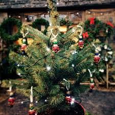 mini trees real tree giftmini toend giftreal