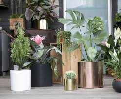 5 fool proof indoor plants and where to buy them