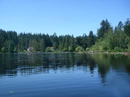 king county native plants lake information page king county