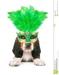 green mardi gras mask puppy wearing mardi gras mask stock photo image 49589078