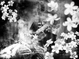 vintage black and white black and white vintage flowers in