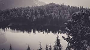 download free black and white forest wallpaper pixelstalk net