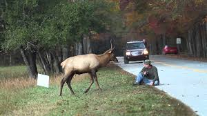 M El K He Elk Vs Photographer Great Smoky Mountains National Park Youtube