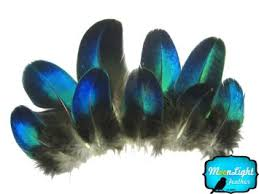 moonlight feathers cheap blue bird feathers find blue bird feathers deals on line at