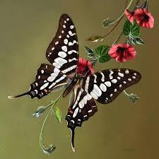 zebra swallowtail butterfly digital art zebra swallowtail