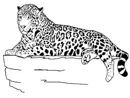 cheetah introduction helmie faessen animals detail
