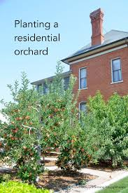 backyard farming home orchards