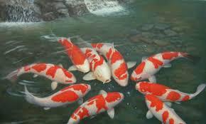 hcm city casts a bigger net for ornamental fish market news