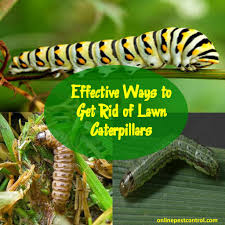 how to get rid of lawn caterpillars online pest control