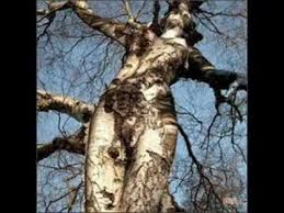 imágenes asombrosas naturaleza cosas asombrosas de la naturaleza youtube