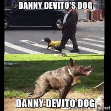 Know Your Meme Dog - danny devito s dog it s always sunny in philadelphia know your