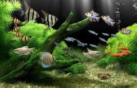 live themes for windows 8 1 download dream aquarium screensaver free download and software reviews