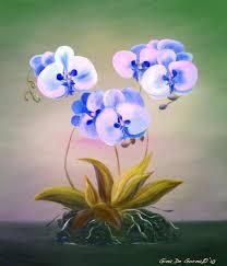 Blue Orchid Flower The 25 Best Blue Orchid Flower Ideas On Pinterest Blue Orchids