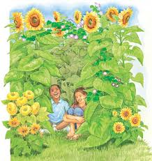 How to Grow a Sunflower House  The Old Farmers Almanac
