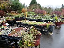 danger garden cornell farms a nursery in portland that i u0027d never