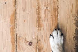 how to select the best hardwood floors for dogs repairdaily