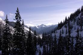 Colorado forest images Free photo colorado forest winter mountains snow scenery max pixel jpg