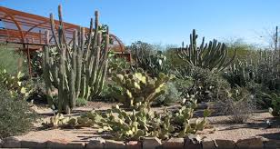 Scottsdale Az Botanical Gardens Scottsdale Resort Scottsdale Az Vacation Tips Advice Ideas