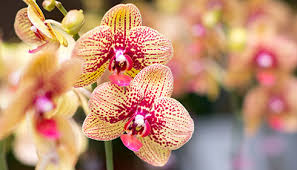 homelife how to grow orchids