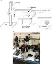 Anti Vibration Table by A Novel Collagen Gel Based Measurement Technique For Quantitation