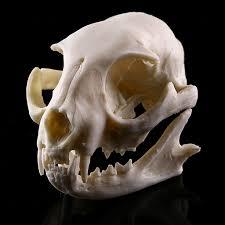 Cheap Halloween Props Online Get Cheap Animal Skeleton Models Aliexpress Com Alibaba