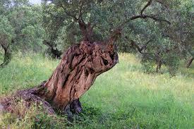 brown tree log free image peakpx