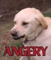 Annoyed Dog Meme - angery know your meme