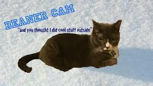Beaner Beaner The Cat U0027s Adventure Cat Cam Footage Youtube