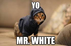 White Cat Meme - yo mr white cat meme expect the unexpected