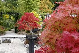 autumn comes early leaves are already changing colour thanks to