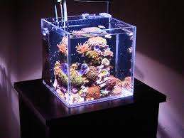 stunner led aquarium light strips aquanerd u0027s top 10 of 2010 aquanerd part 1346367729000