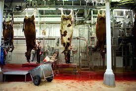 Slaughterhouse Blog by Slagtehus U2014 Katie Currid