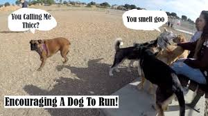 how to make a lazy dog run and exercise dog eats frozen chicken