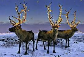 christmas reindeer christmas images christmas reindeer christmas 2008 wallpaper