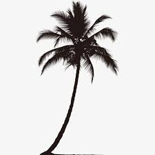 coconut trees silhouette coco sketch black png image for free