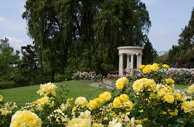 Huntington Botanical Gardens Pasadena by Rose Garden