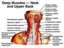 Neck To Shoulder - best 25 stiff shoulder ideas on shoulder flexibility