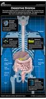 Picture Diagram Of The Human Body Human Digestive System Diagram How It Works