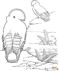 guianan of the rock coloring page free printable coloring pages